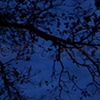 'black tree + blue night'