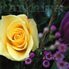 'yellow rose II'