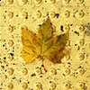 'yellow leaf + crosswalk'