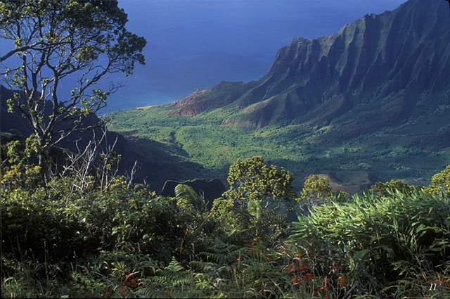 cliffs, rainforest, Kalalau Valley, Hawaii, pali,lookouts