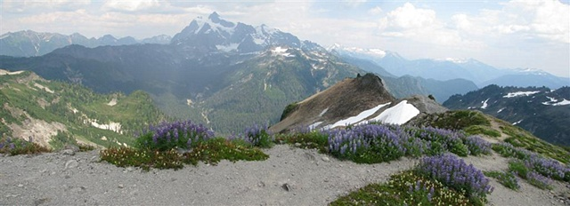 Mt. Shuksan, Ptarmigan Ridge Trail, North Cascades, alpine wild flowers