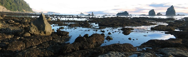 Seastacks, Washington coastline, tidal pools, hiking trails