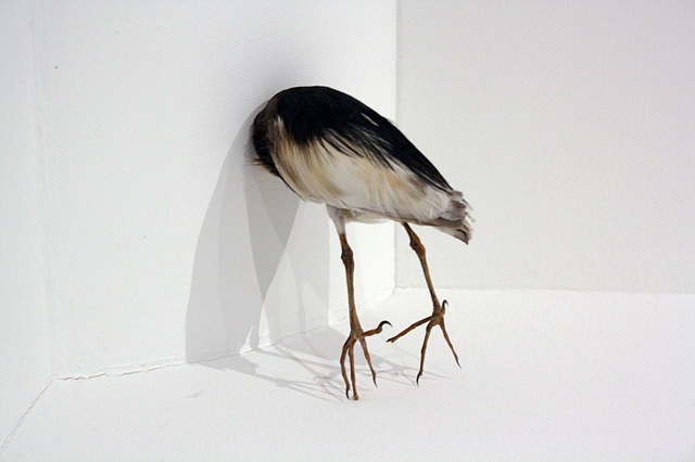 joseph g. cruz art. birds, taxidermy, david harper, taxidermy, installtion, mirror, contemporary artist
