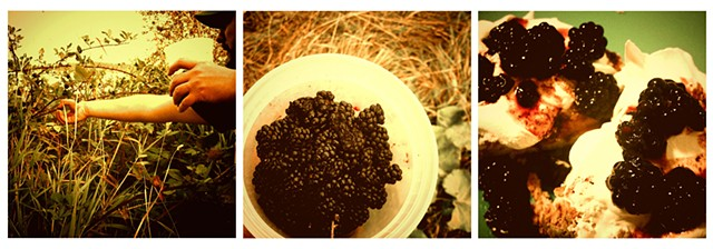 Oregon Blackberries: A Delicious Journey