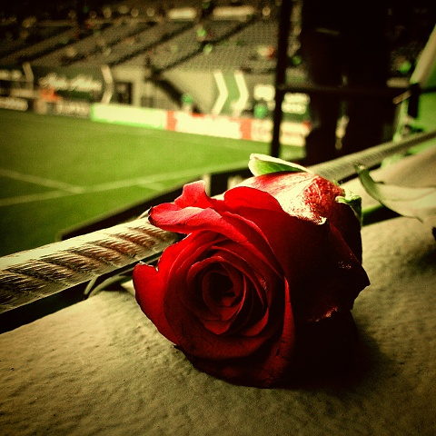 We Are the Rose City
