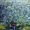 Apple Tree Summer
