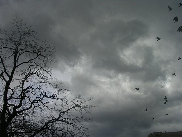 Inwood Birds 3