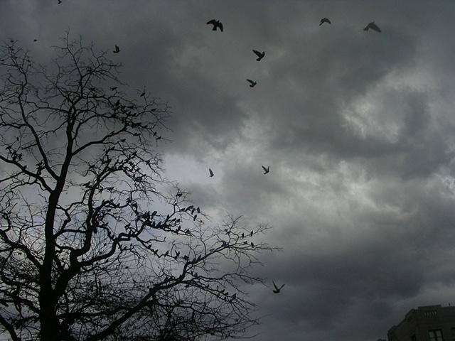 Inwood Birds 2