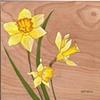 Daffodil on Wood