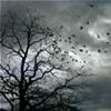 Inwood Birds 4