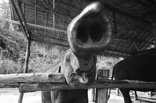 Thai Elephant Conservation Centre | Chiang Mai | Thailand