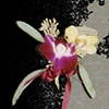 Orchid Boutonnière