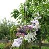 Hanging Basket Alter Arrangement