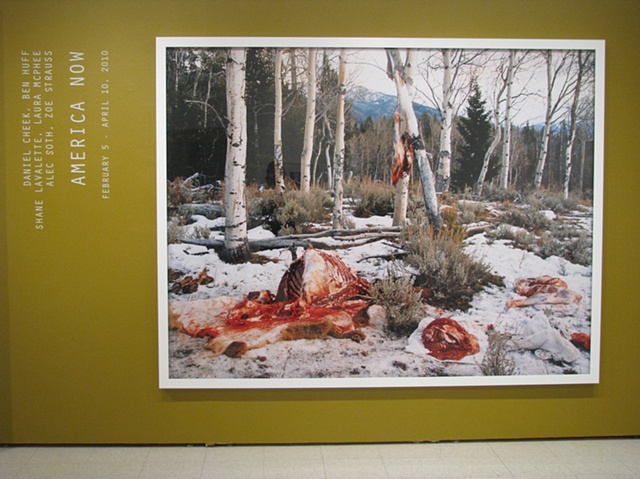 "America Now, installation view of title wall, Laura McPhee, ""Quartered Rocky Mountain Elk, Milky Creek, White Cloud Mountains, Idaho,"" 2004"