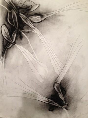 Untitled 36
