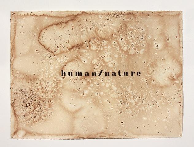 drawing, walnut dye, walnut farms, jason reno