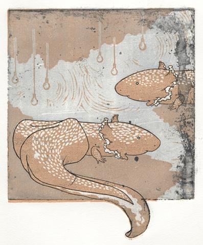 Sometimes a Salamander is just a Salamander