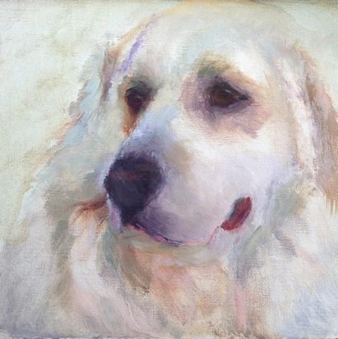 Great Pyrenees Study