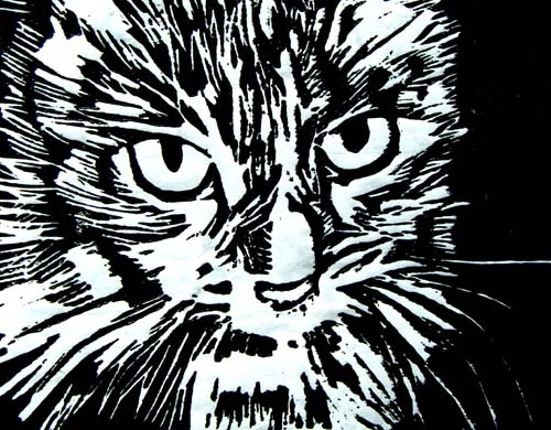 CORY CAT