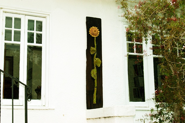 Sunflower on Catalina
