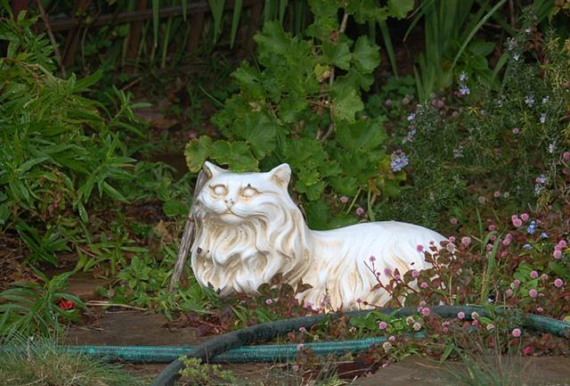 Cat on Ventura