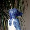 Blue Dog on Sonoma