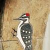 Segal Woodpecker