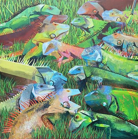 Iguanas of SoFL