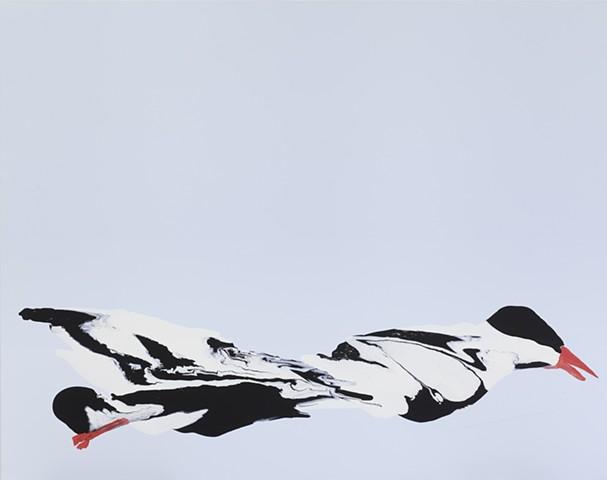 Arctic Tern, Broken Wings