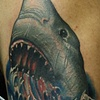 Shark cover up