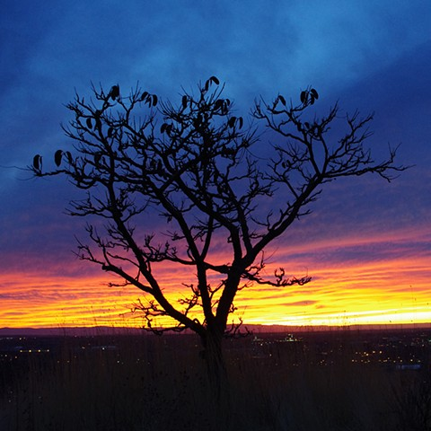 150 Boise Sunsets: Pod Tree on Eagle Ridge
