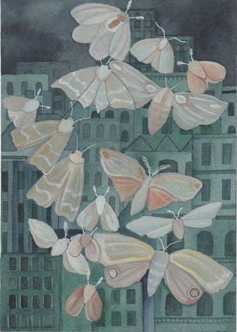 City Moths