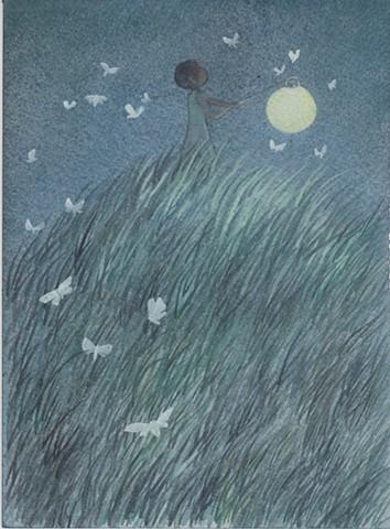 Lantern Moths
