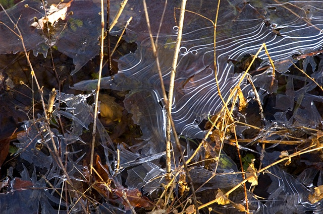 Ice Pattern, Ryerson Woods Conservation Area, Riverwoods, IL