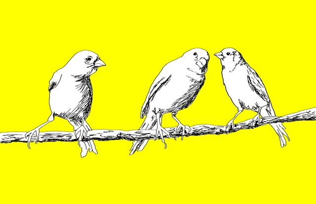 Canary #5 Avian Series