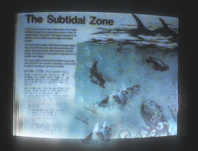 Subtidal Zone (sign at site) 1996