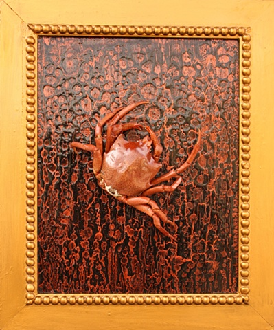 """Pugettia producta"" or ""Kelp Crab"" (SOLD)"