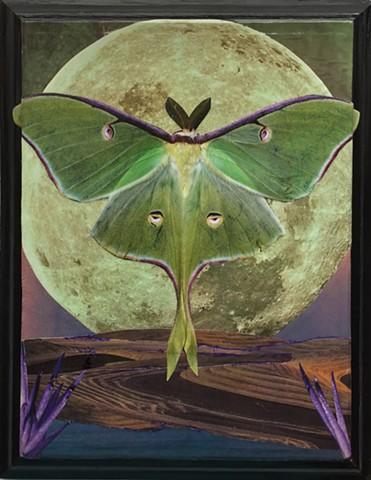 Otherworldy Landscapes Series. Luna Moth.