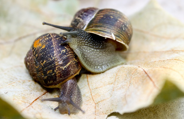 Mollusk Love