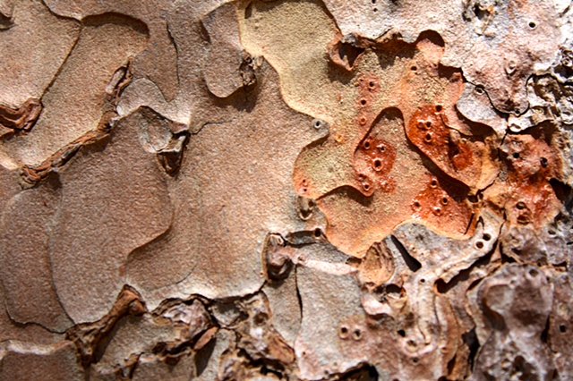 ant terrain