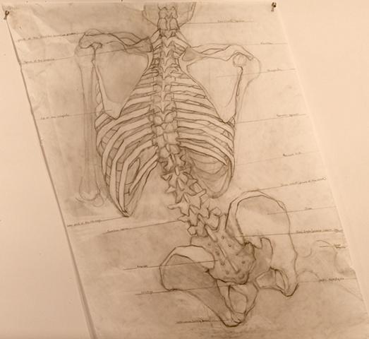 Spine (skeletal view)