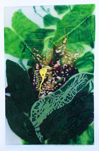 foliage, Florida, bromeliad