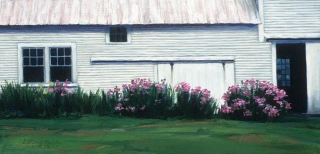 Vermont, farm buildings, irises, flowers