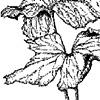 Leaves in broken vase
