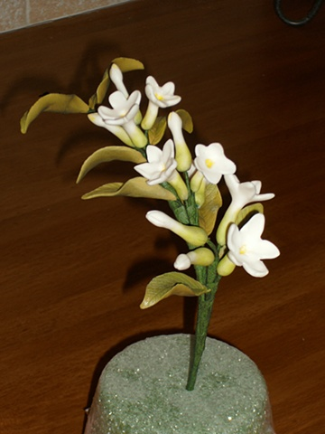 Stephanotis - Take 1