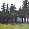 Monhegan Tree Line