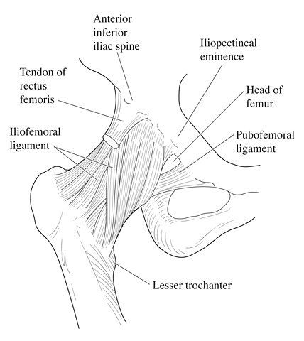 Ligaments of the Hip