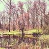 Forest Walk #1