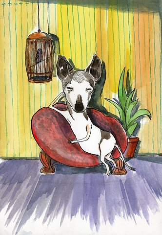 An Italian greyhound named Taja.