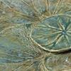 Radiant Lotus Myriad